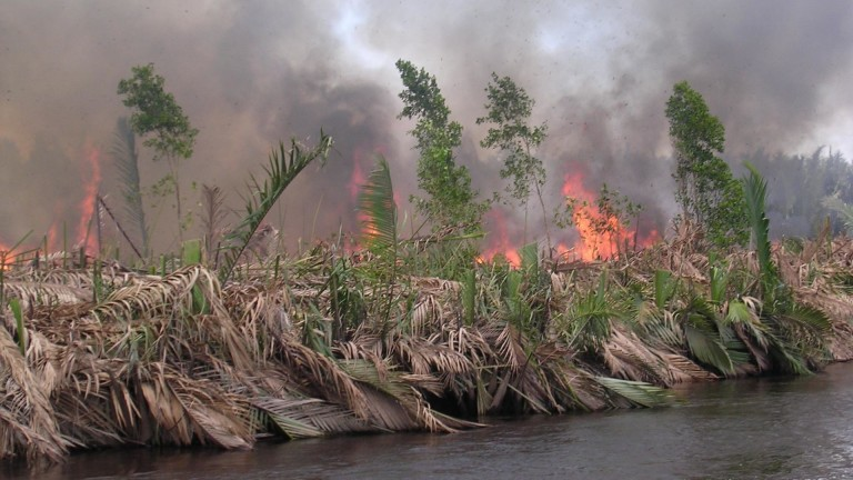 1-burning-peatland-in-kalimantan-indonesia-pieter-van-eijk-e1467894231892-768x432